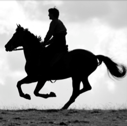 Social, competitive or commercial – How2 : Keeping horses